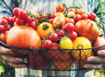 Autumn tomatoes